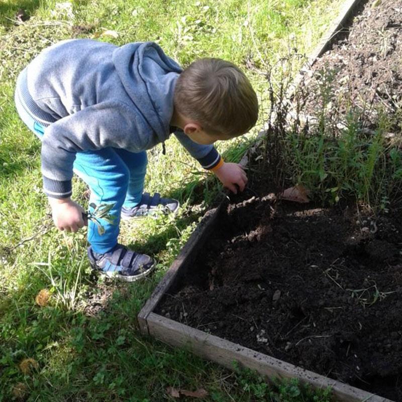 Otrok sadi zelenjavo