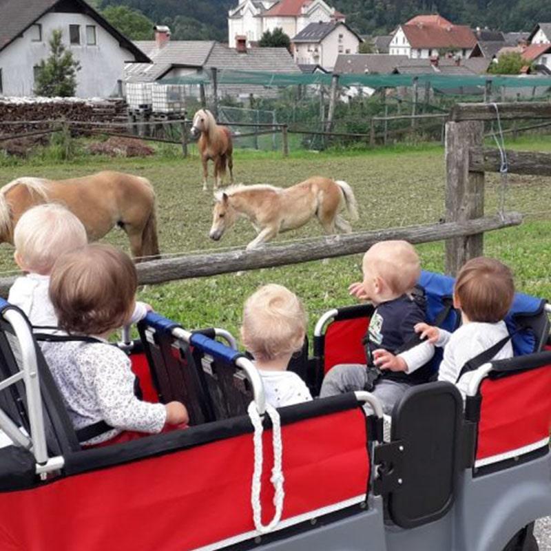 Otroci gledajo konje